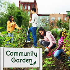 Sustainable Living Academy - Community Gardens Program - Non-Profit